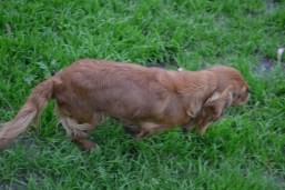 Banksia Park Puppies Silli - 2 of 10