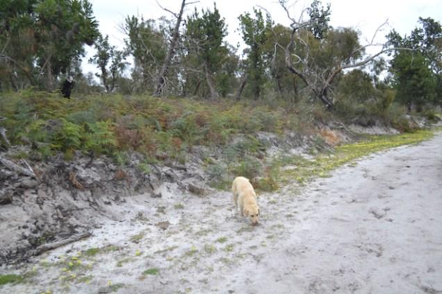 banksia-park-puppies-strawberri-14-of-14