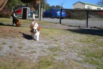 Sheila- Banksia Park Puppies - 13 of 32