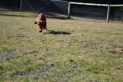 Sheila- Banksia Park Puppies - 21 of 32