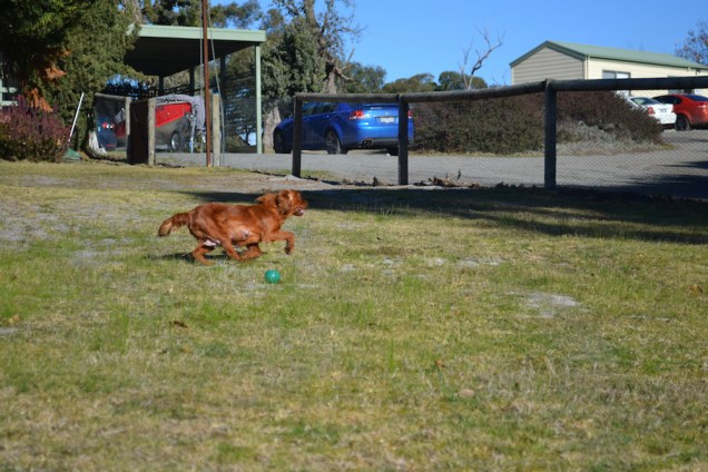 Sheila- Banksia Park Puppies - 32 of 32