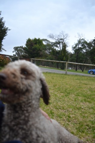 Banksia Park Puppies Fussle - 38 of 43