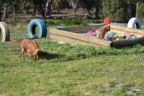 Banksia Park Puppies Jacinta - 29 of 49