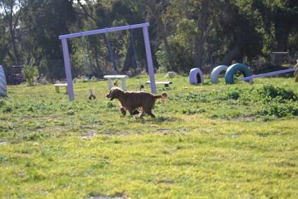 Banksia Park Puppies Jacinta - 44 of 49