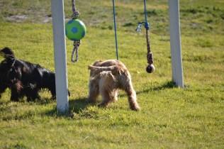 Banksia Park Puppies Jazz - 10 of 41