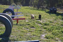 Banksia Park Puppies Jazz - 2 of 41