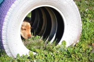 Banksia Park Puppies Jazz - 21 of 41