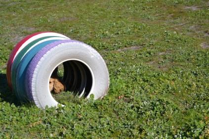 Banksia Park Puppies Jazz - 23 of 41