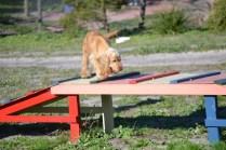 Banksia Park Puppies Jazz - 29 of 41
