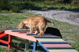 Banksia Park Puppies Jazz - 32 of 41