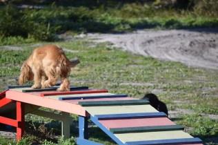 Banksia Park Puppies Jazz - 33 of 41