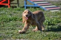 Banksia Park Puppies Jazz - 36 of 41