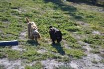 Banksia Park Puppies Jazz - 5 of 41
