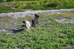 Banksia Park Puppies Ponky - 10 of 36