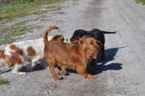 Banksia Park Puppies Ponky - 14 of 36