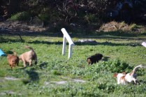 Banksia Park Puppies Ponky - 18 of 36