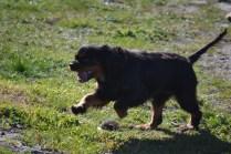 Banksia Park Puppies Ponky - 19 of 36