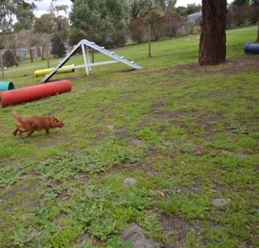 banksia-park-puppies-hailey-11-of-25