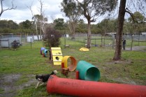 banksia-park-puppies-hailey-16-of-25