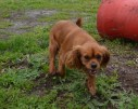 banksia-park-puppies-hailey-19-of-25