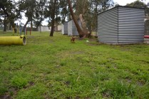 banksia-park-puppies-hailey-6-of-25