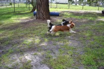 banksia-park-puppies-jose-19-of-40
