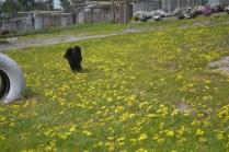 banksia-park-puppies-josefa-2-of-23