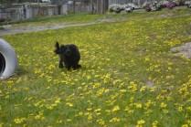 banksia-park-puppies-josefa-3-of-23