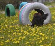 banksia-park-puppies-josefa-8-of-23