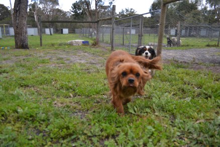 banksia-park-puppies-juhu-11-of-12