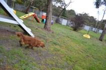 banksia-park-puppies-juhu-8-of-12
