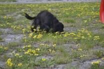 banksia-park-puppies-julia-2-of-14