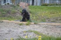 banksia-park-puppies-julia-5-of-14