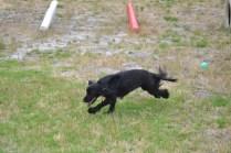 banksia-park-puppies-julia-josepha-13-of-39