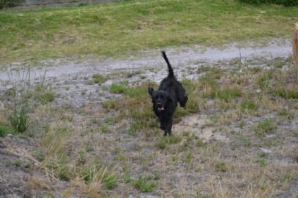 banksia-park-puppies-julia-josepha-21-of-39