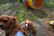 banksia-park-puppies-julsi-4-of-35