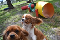 banksia-park-puppies-julsi-5-of-35