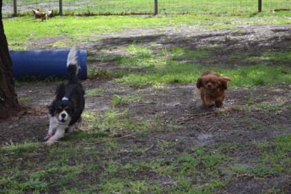banksia-park-puppies-julsi-9-of-35
