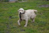 banksia-park-puppies-ocean-14-of-21