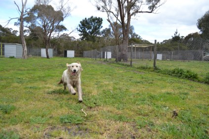 banksia-park-puppies-onnie-25-of-27