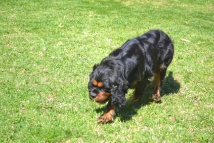 banksia-park-puppies-panky-13-of-25