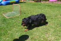 banksia-park-puppies-panky-14-of-25
