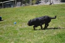 banksia-park-puppies-panky-19-of-25