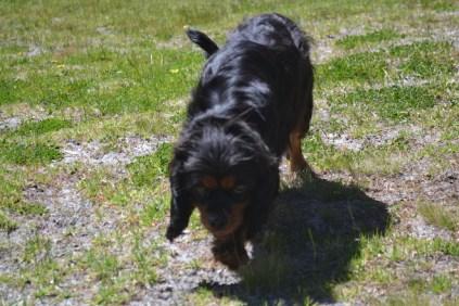 banksia-park-puppies-panky-7-of-25