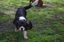 banksia-park-puppies-patricia-18-of-39