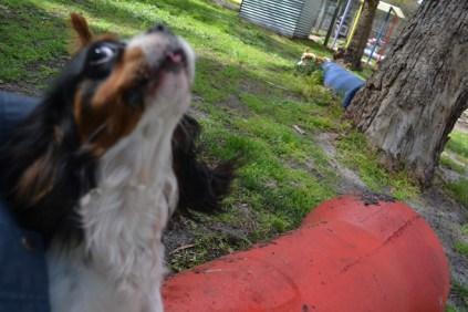 banksia-park-puppies-patricia-19-of-39