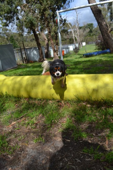 banksia-park-puppies-patricia-23-of-39