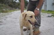 banksia-park-puppies-raspberri-11-of-11