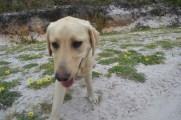 banksia-park-puppies-raspberri-8-of-11
