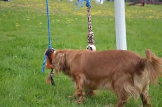 banksia-park-puppies-skyla-10-of-16